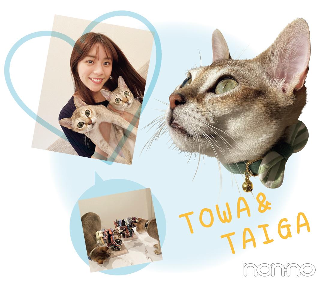 TOWA&TAIGA