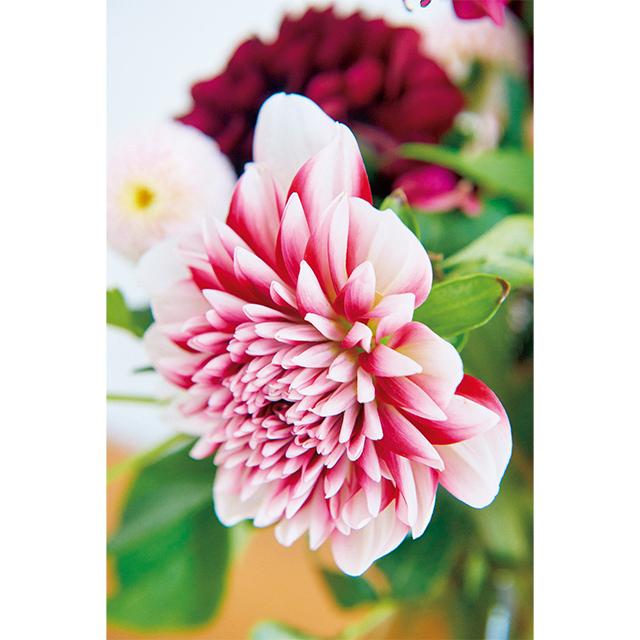 日常を素敵に飾る花