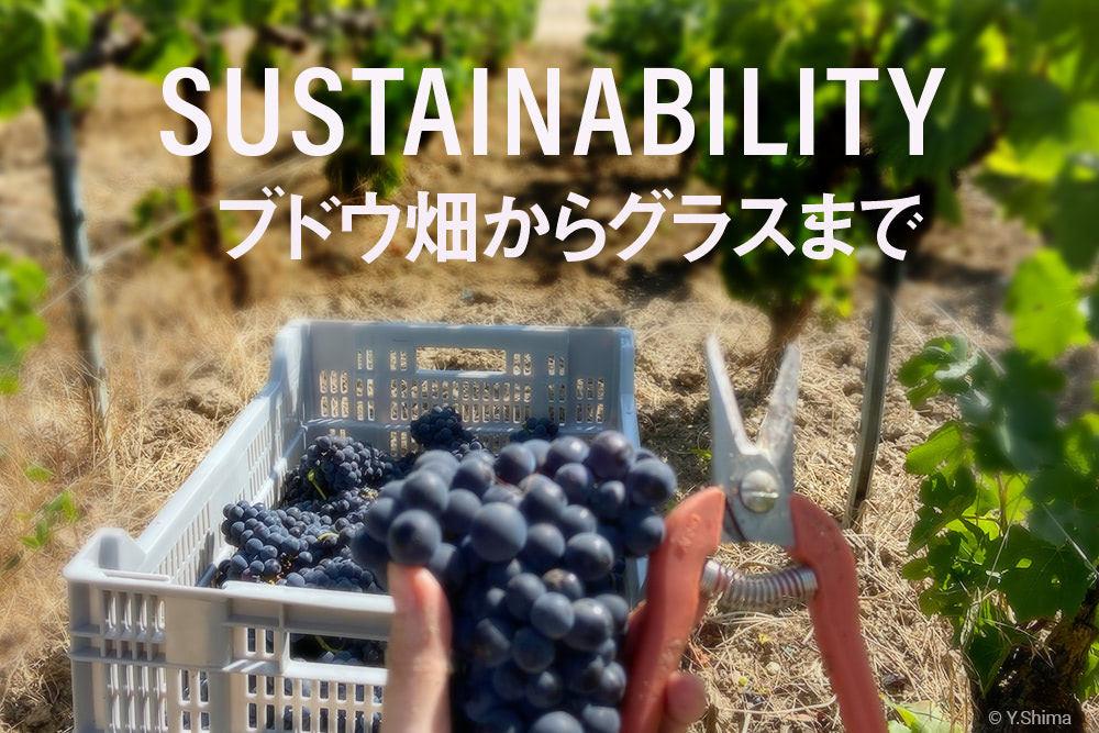 ワイン造りにおけるサステナビリティとは、ブドウ畑からグラスまで、全ての過程をカバーする(写真:筆者撮影)