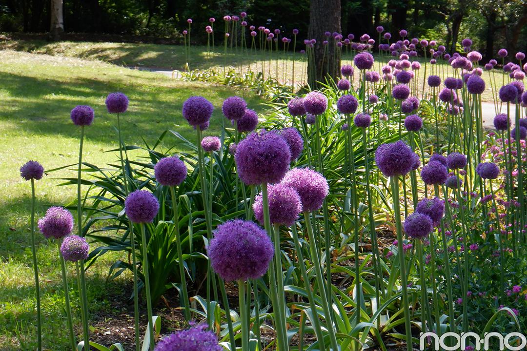 7・8月合併号で優子もロケに♡ 国営武蔵丘陵森林公園の幻想的な花畑に癒されて_1_3