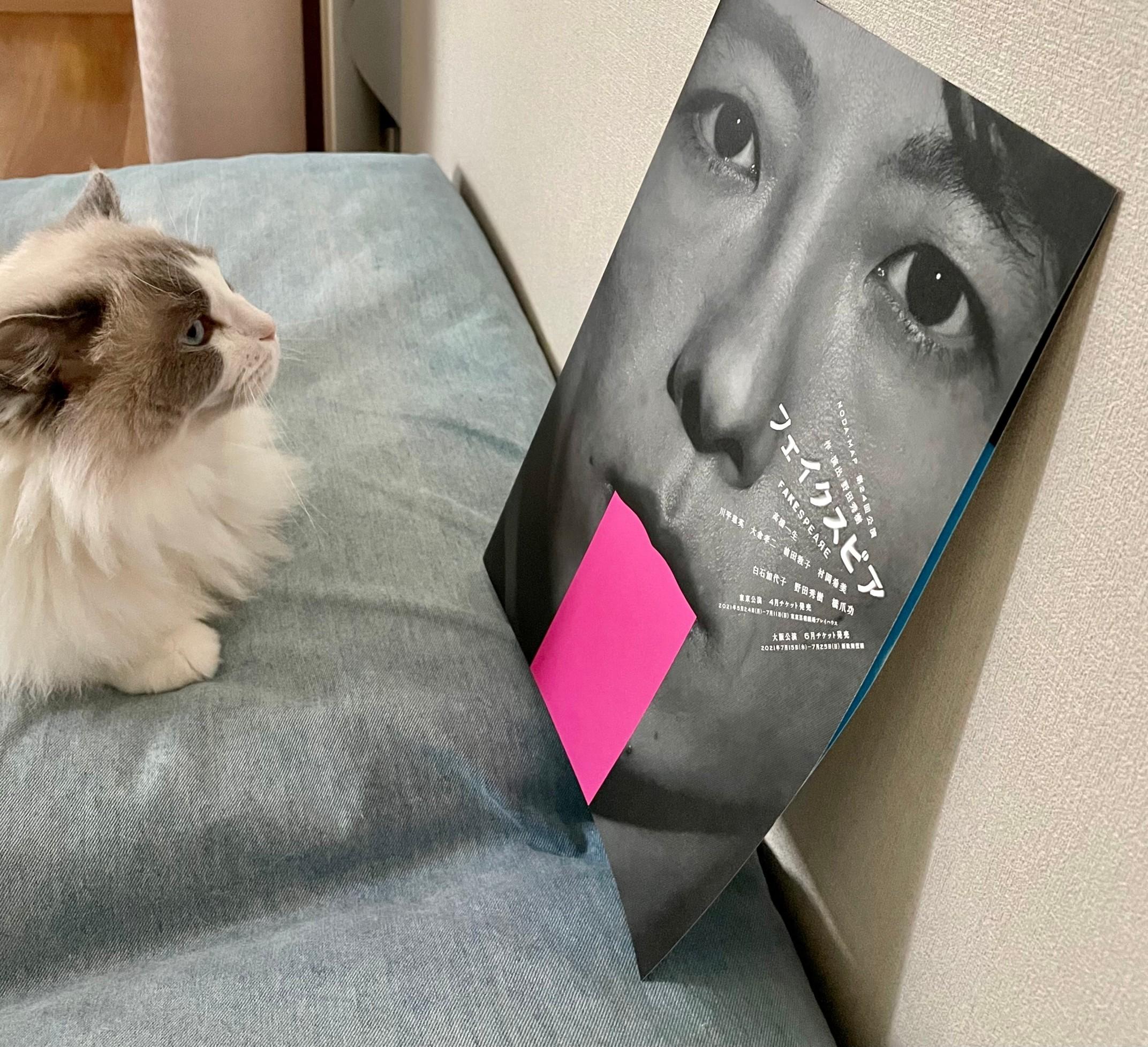 猫とパンフレット