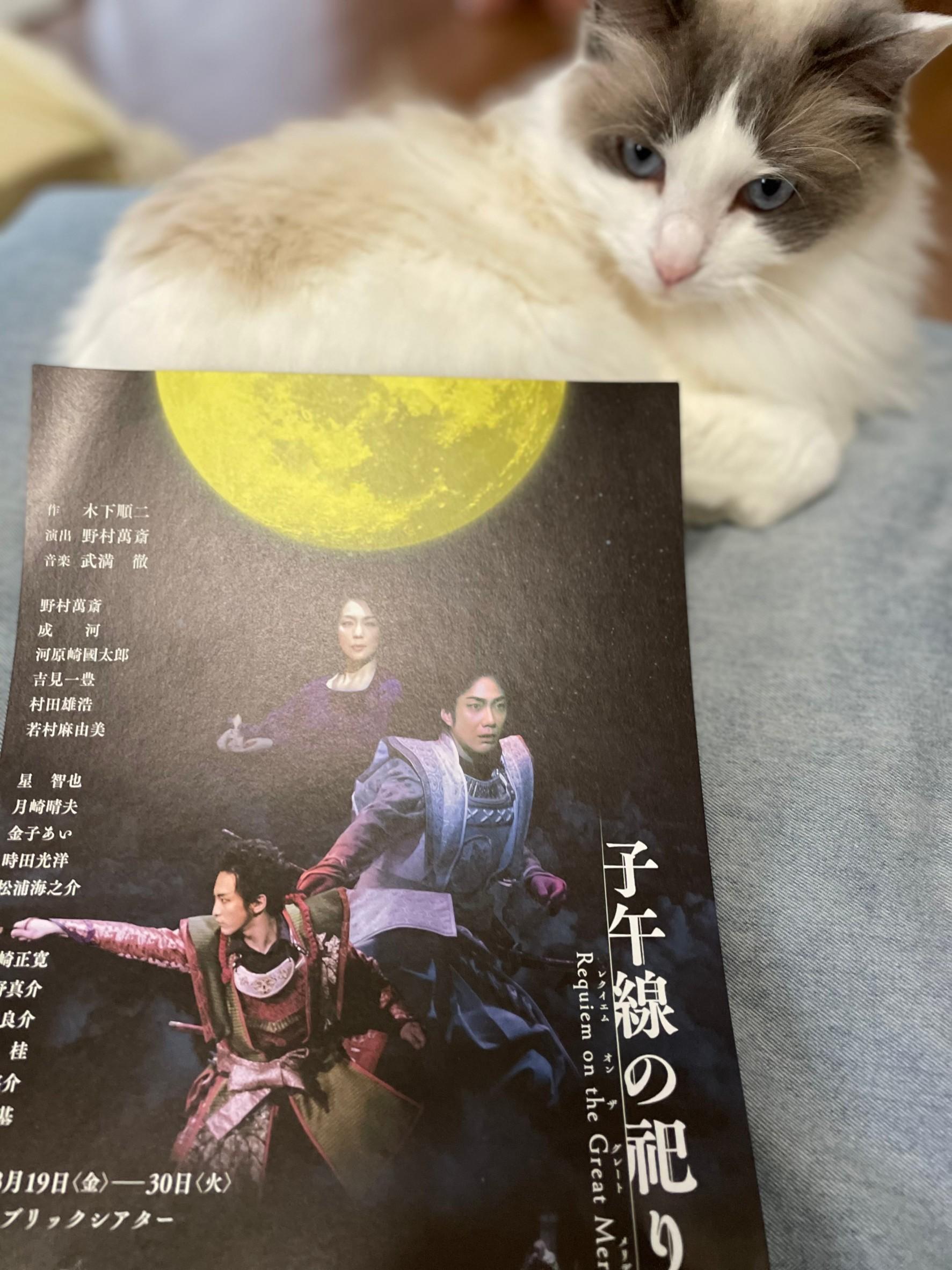 猫(上の子)とチラシ