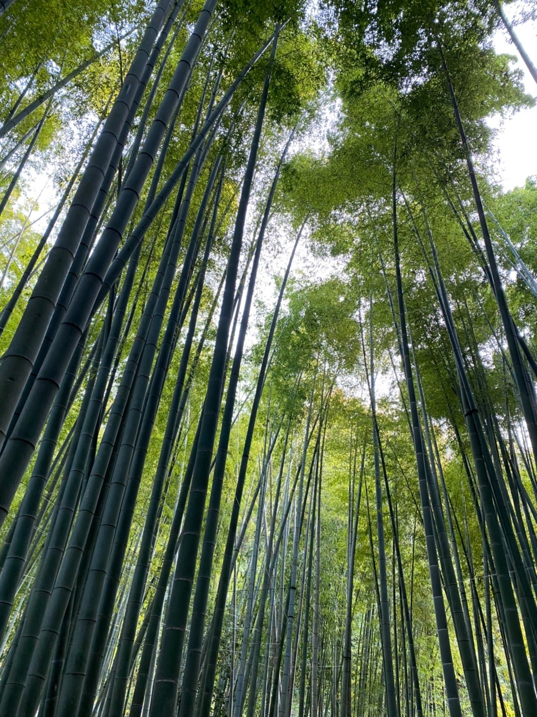 秋の鎌倉散策_1_3-2