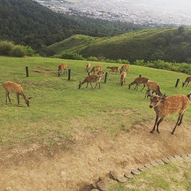癒しの女子旅、悠久の都「奈良」へ行ってきました♪おすすめランチはこちら!_1_4