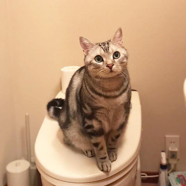 トイレの神様_1_1