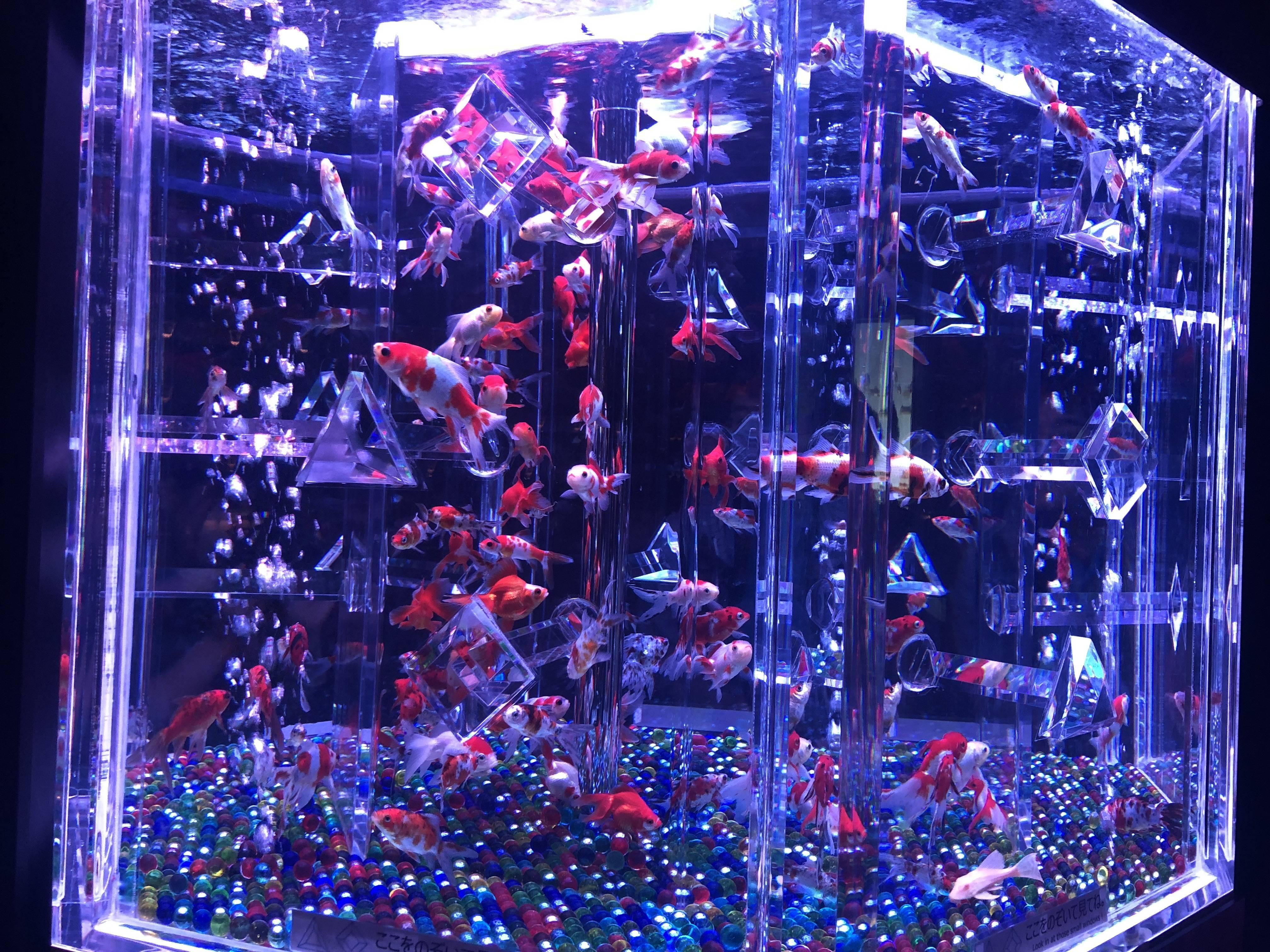 Vol.59♡ 9/24まで!8000匹の金魚がとてもフォトジェニック!【日本橋アートアクアリウム2018】_1_5