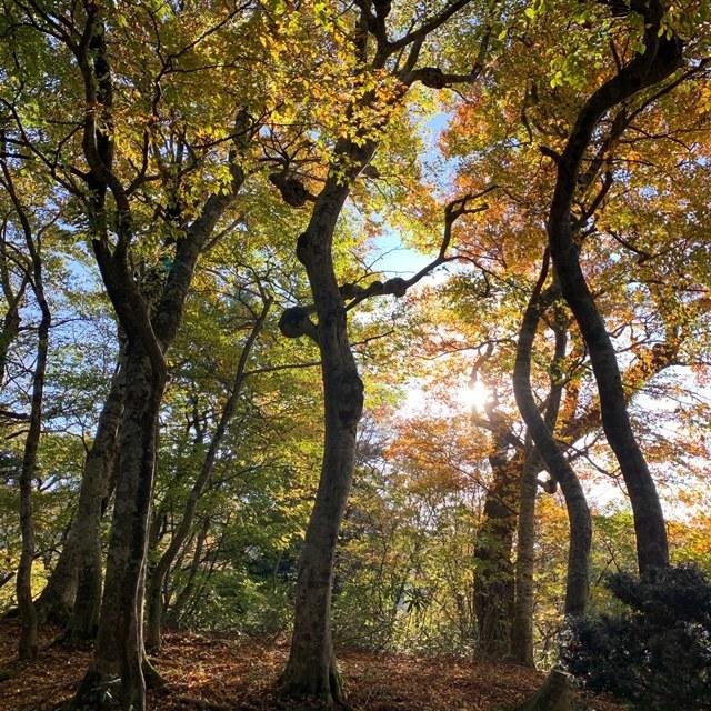 秋の行楽 大山ハイキングへ_1_1