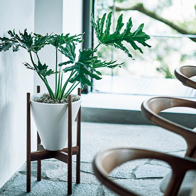 白鉢&木製スタンドなら インテリアになじむ