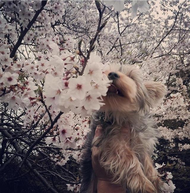 犬を飼うということ【40代 私の暮らし】_1_7