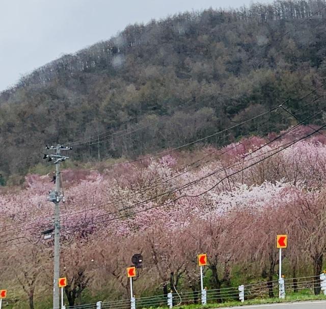 福島県でおすすめの『桜の名所』①_1_4