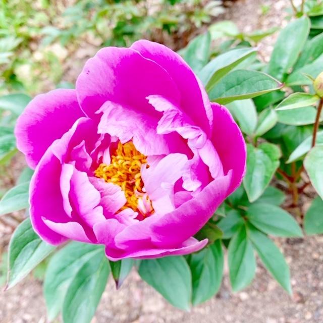 ☆「令和」元年☆藤の花のお花見でスタート!_1_4-3