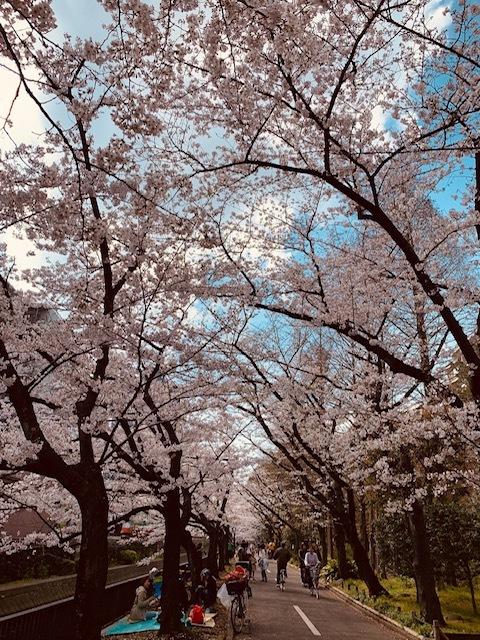 そうだ!桜を見に皇居へいこう♪_1_1-1