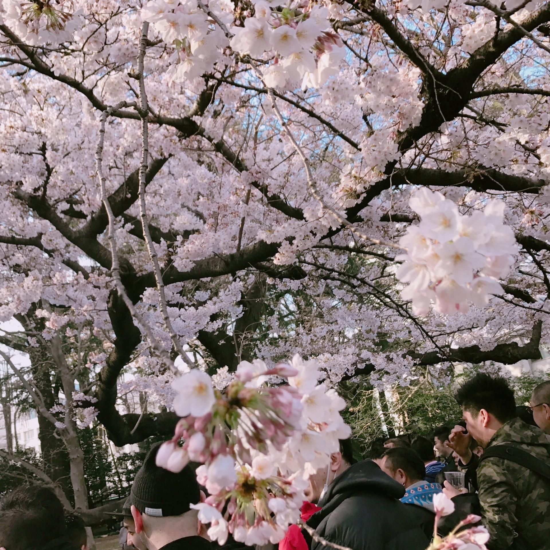 桜の季節ですね…♡_1_1