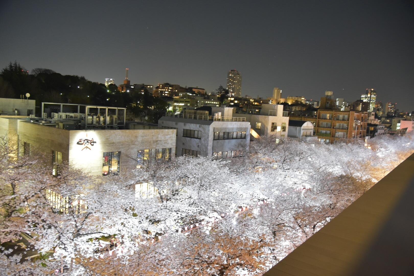 Vol.71♡【2019】目黒川の桜・お花見情報_1_7-1