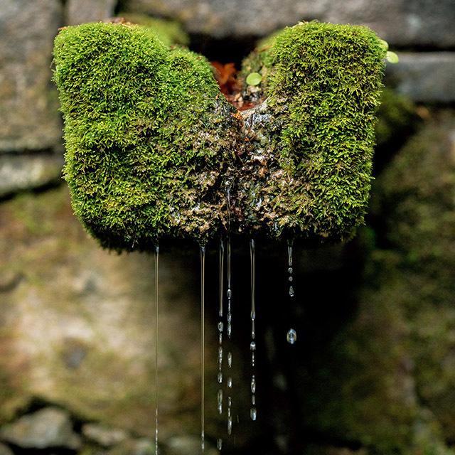 苔と水が生む日本独特の自然美や造形に出会える。