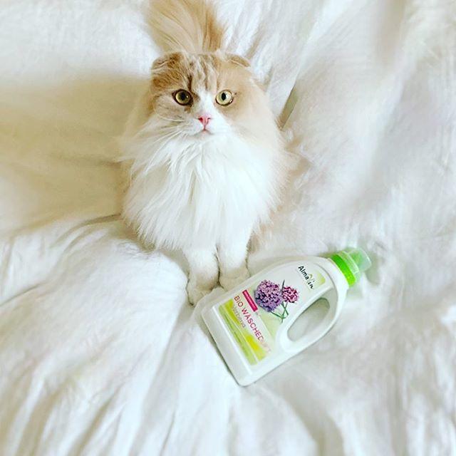 ふわっと香る心地よさ♡愛猫にも優しいオーガニックの柔軟仕上げ剤_1_1