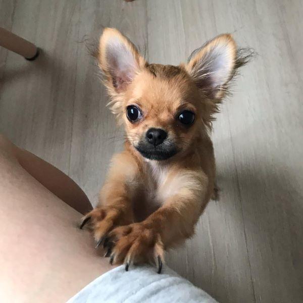 在宅ワークの癒し犬