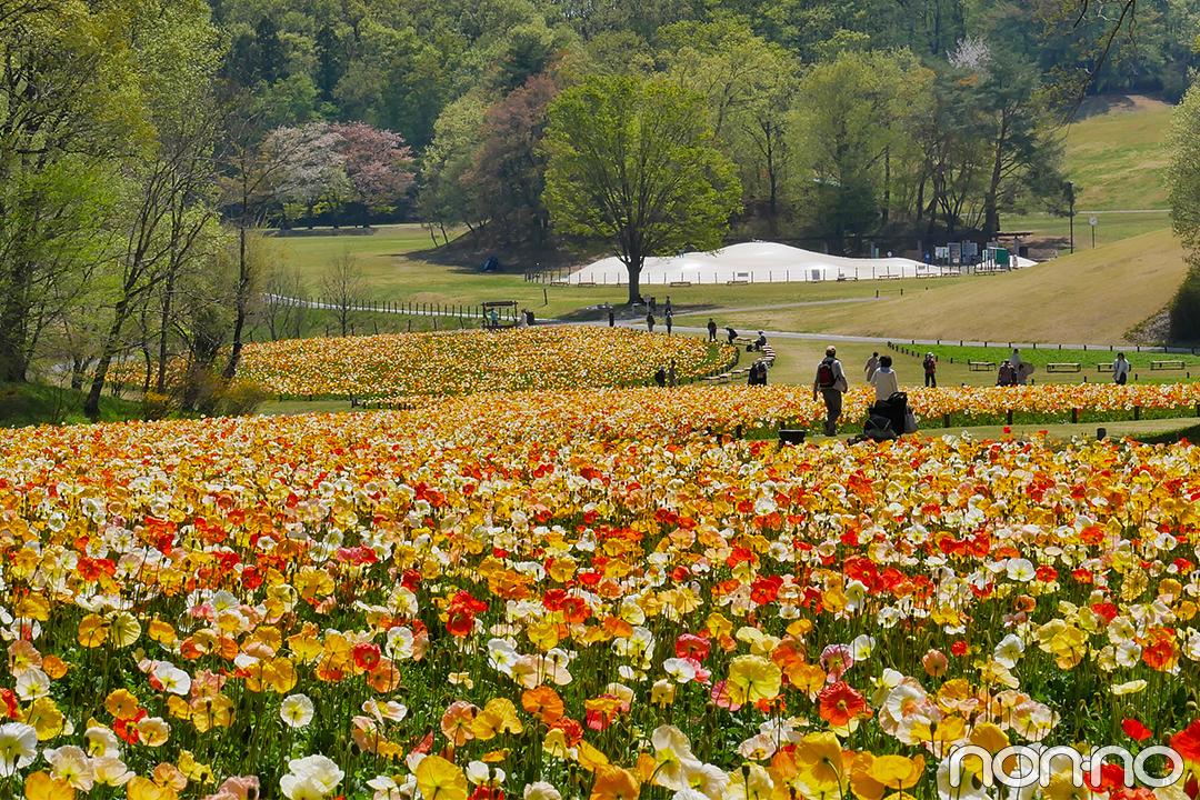 7・8月合併号で優子もロケに♡ 国営武蔵丘陵森林公園の幻想的な花畑に癒されて_1_1