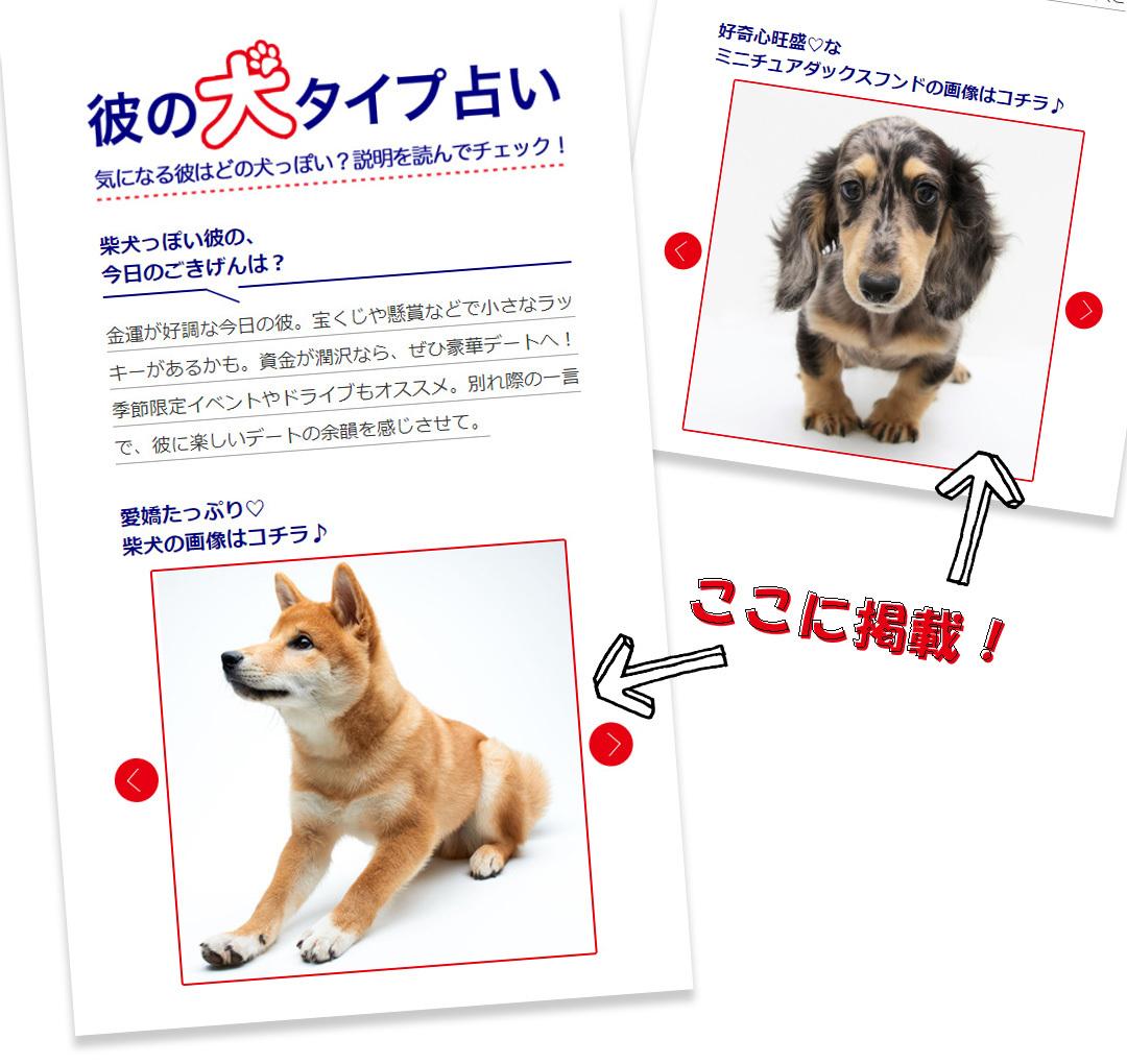 【募集】「彼の犬タイプ占い」に、愛するワンコ♡の画像を掲載しませんか?_1_1