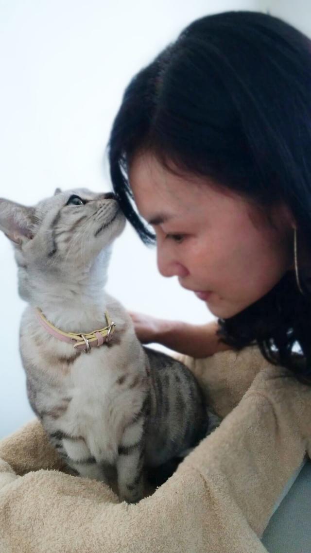 フンフン匂いを嗅ぐセイラちゃん♡美人?美猫、で頭もとってもいいんです!