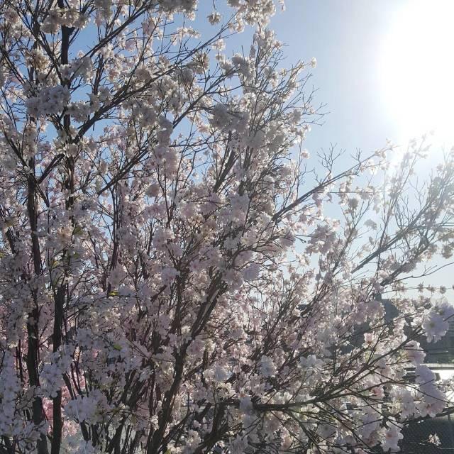 【着回しコーデ】パーカー大活躍な春到来。着回し4選ご紹介_1_2