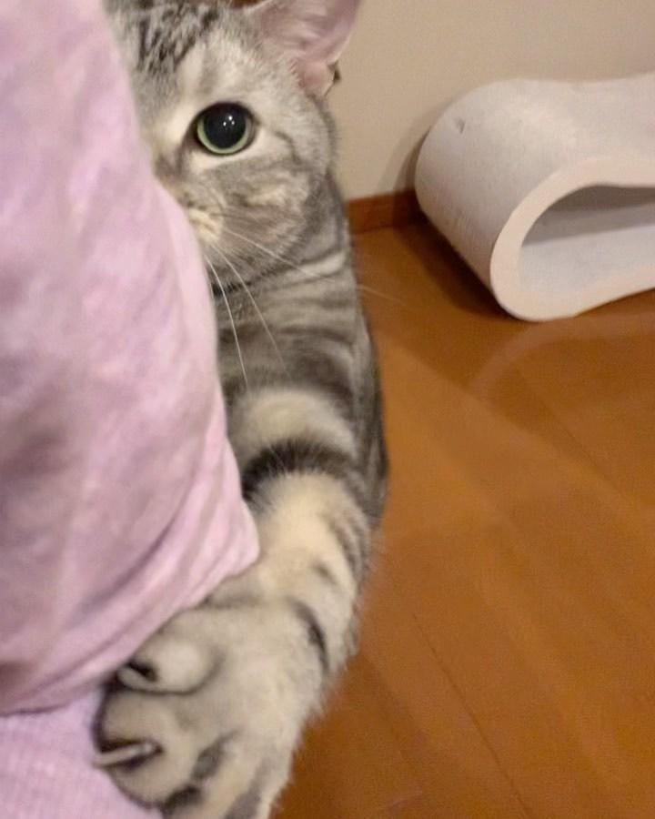 リモートワークと猫_1_1