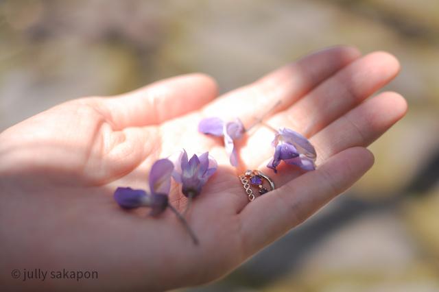 【番外編】ほろほろと藤香り ネモフィラの青に包まれて@昭和記念公園_1_6