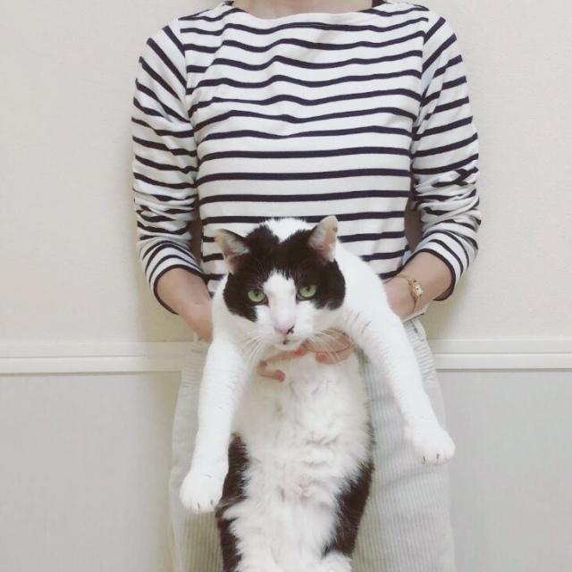 猫はオマケです。