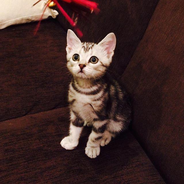 エクラ ベビーアラン 子猫