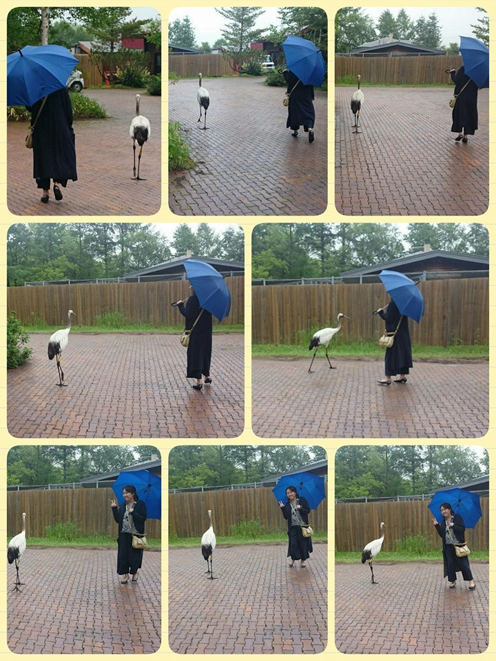 北海道釧路湿原 丹頂鶴自然公園にて鶴と一緒に。