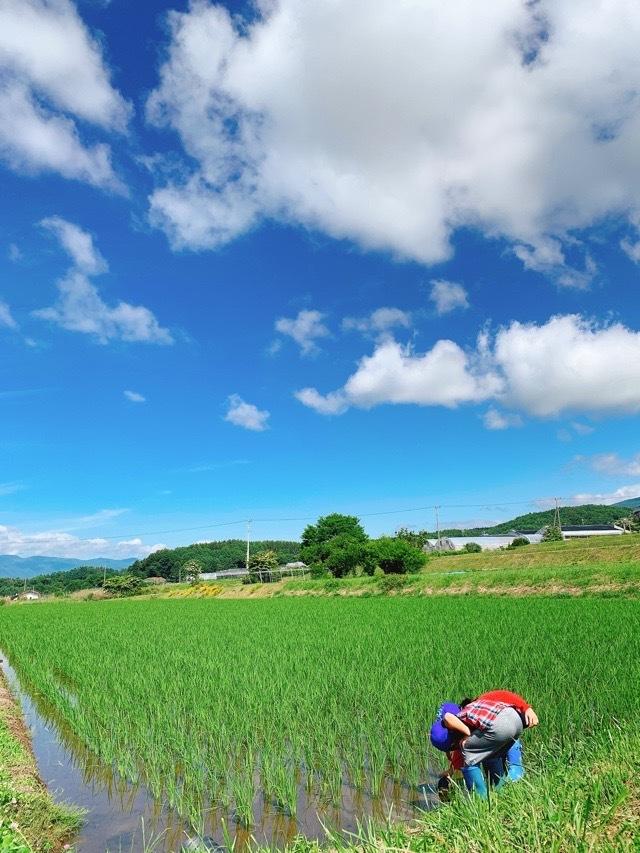 日本を楽しもう!四季の移ろいが教えてくれる真の美しさ_1_2-2