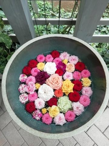 水に浮かぶ色とりどりの薔薇の花たち