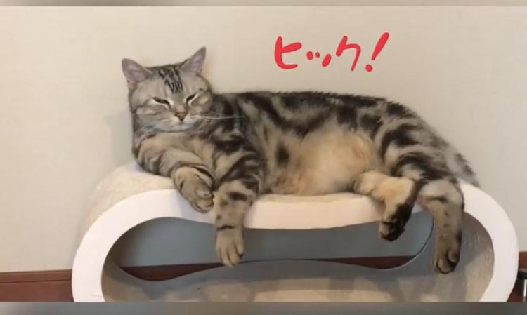しゃっくりする猫⁉︎動画_1_1