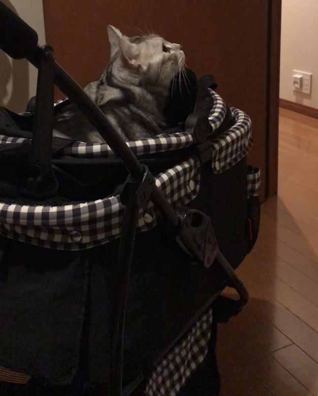 猫のためのカート