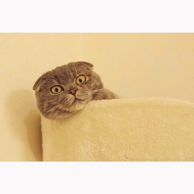 猫宅紀行、知らない町へのお出かけ。_1_1-7