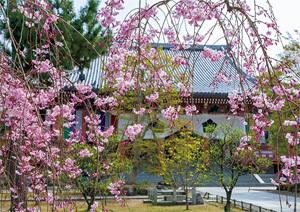 桜の美しさをアートで鑑賞、国宝の『桜図』【「京都」桜にまつわる10の愉しみ】_1_2