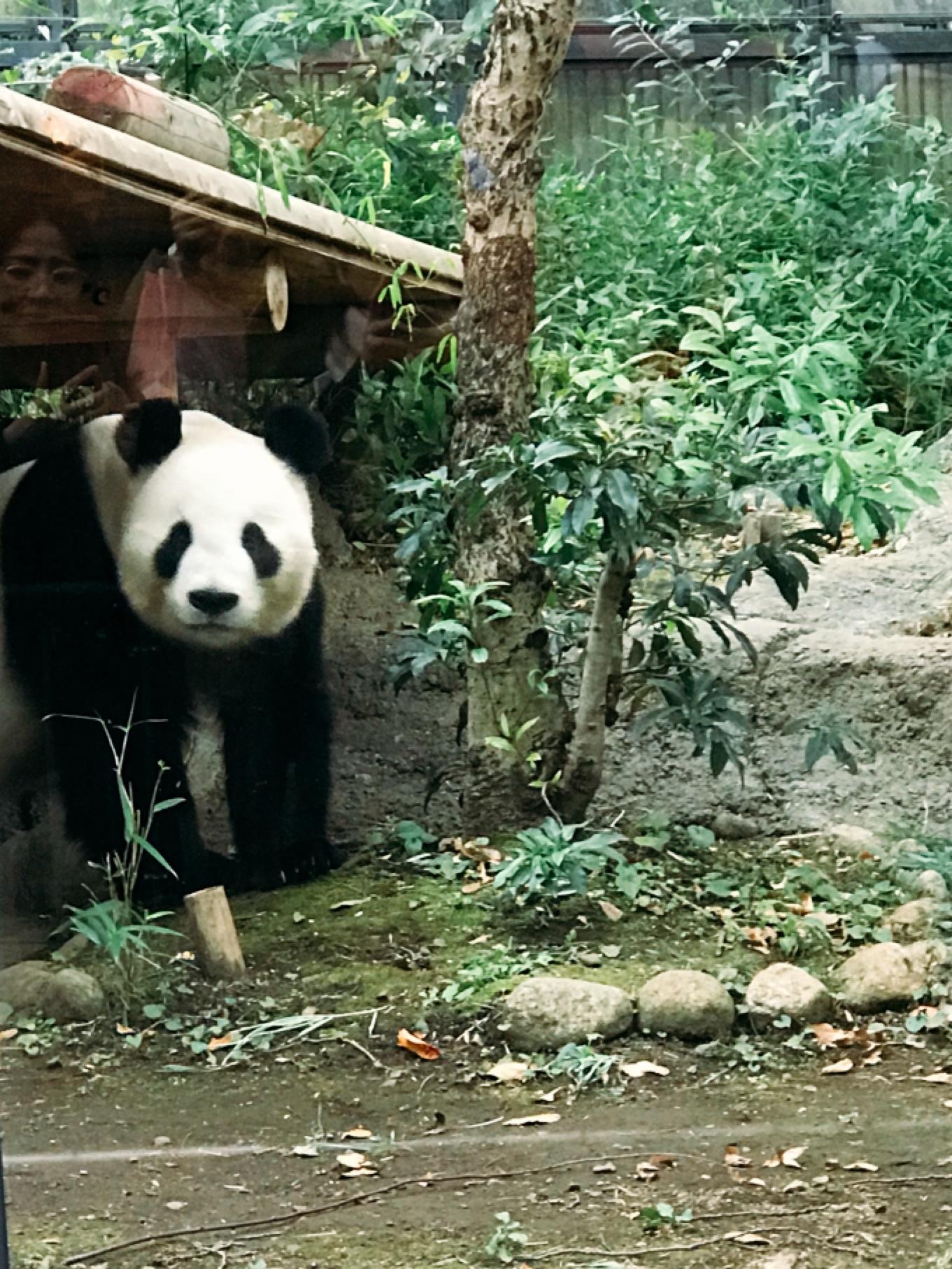 上野でお散歩① 「怖い絵展」「上野動物園」_1_5-2