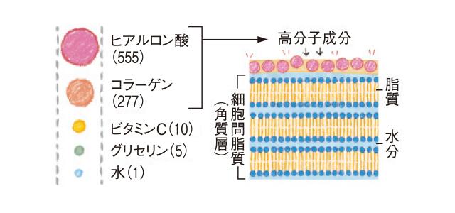 美容成分の分子量の図解