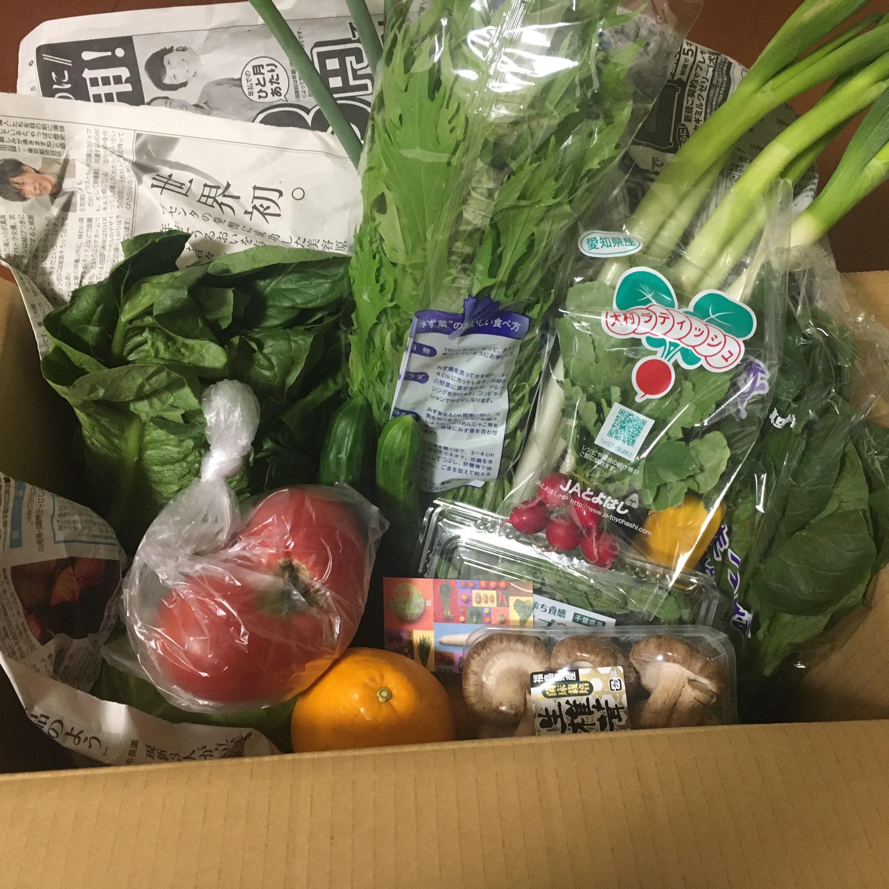 届いたお野菜たちです