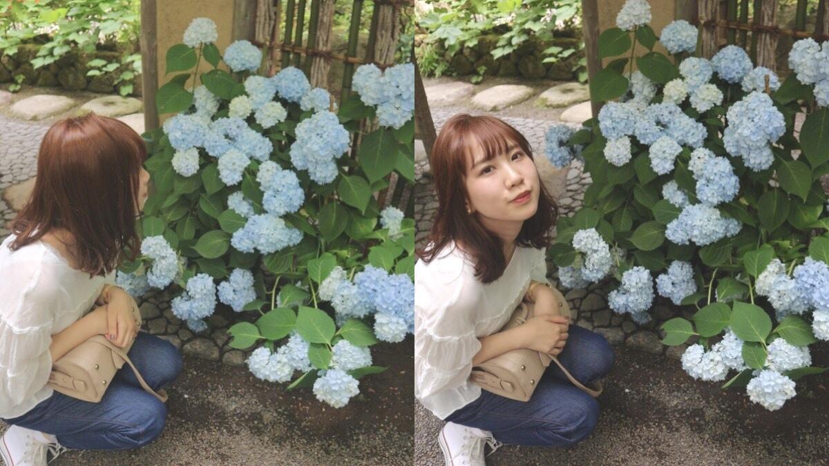 オススメ紫陽花スポット ⸌◦̈⃝⸍❁⃘_1_3