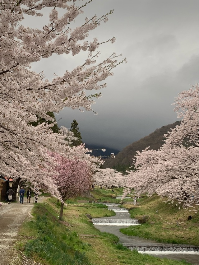 福島県でおすすめの『桜の名所』②_1_2