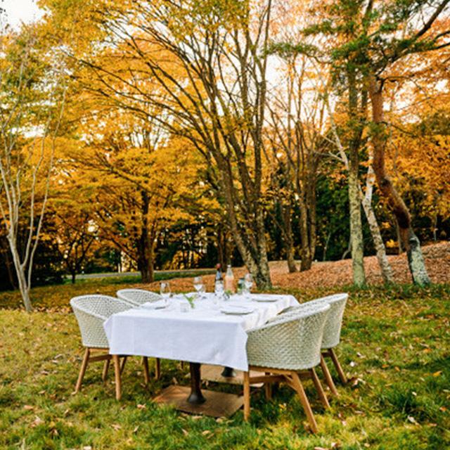 森の中でのさまざまな食体験「ターブル・ナチュール」