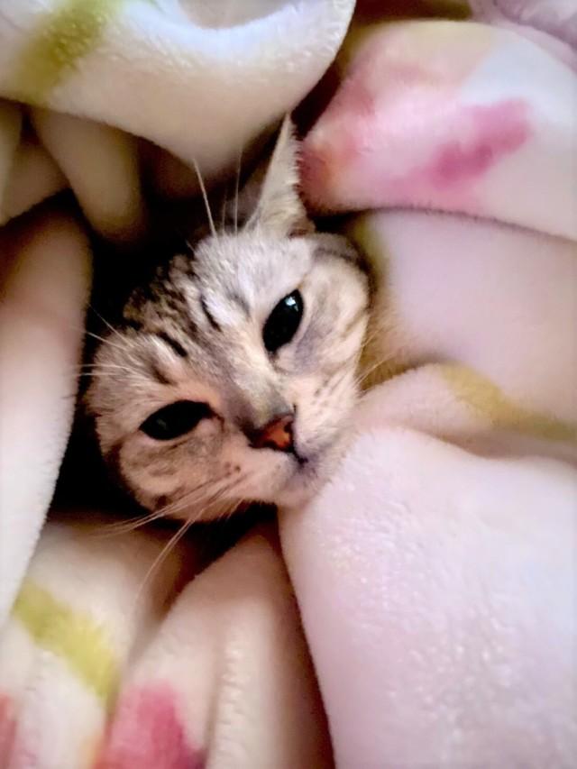 愛猫セイラ店長との日々_1_4