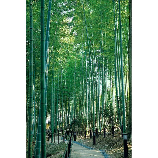 敷地内には名勝・奈良公園に追加指定された瑜伽山(ゆうがやま)園地があり