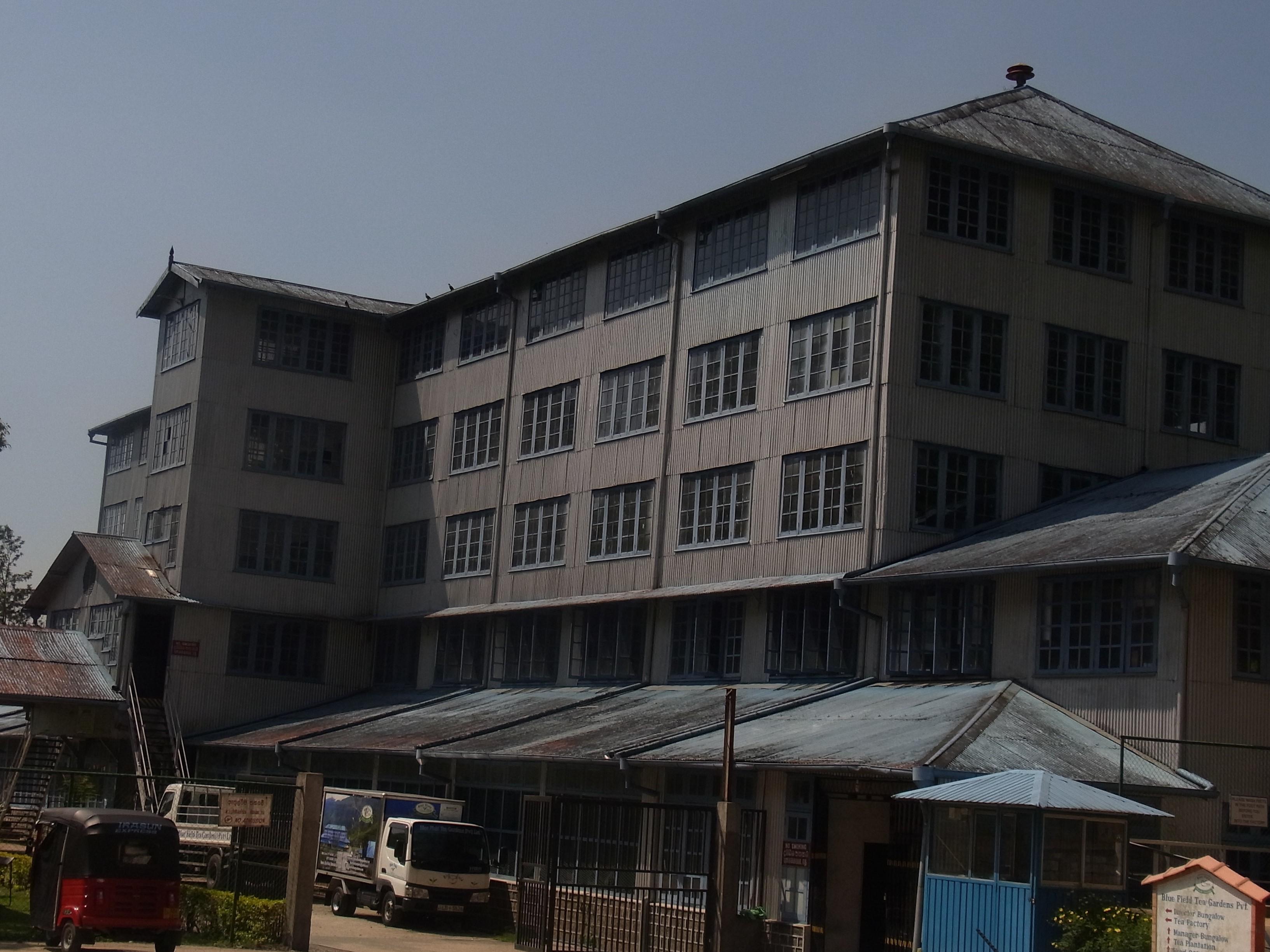 紅茶畑と工場@スリランカ_1_7