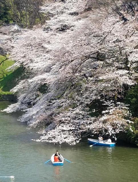そうだ!桜を見に皇居へいこう♪_1_3-1