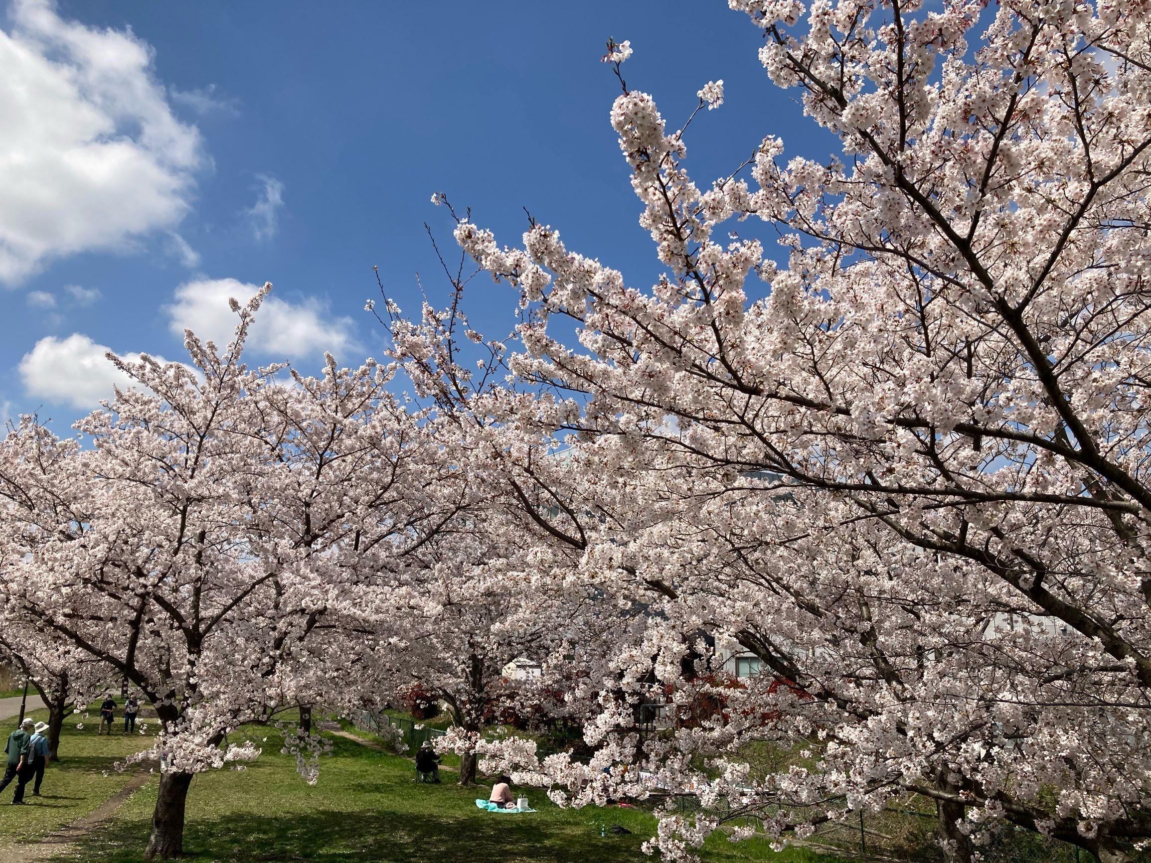 春の揺れスカート_1_6