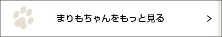 夜の探検隊【にゃんこLIFE まりもちゃん #20】_1_2