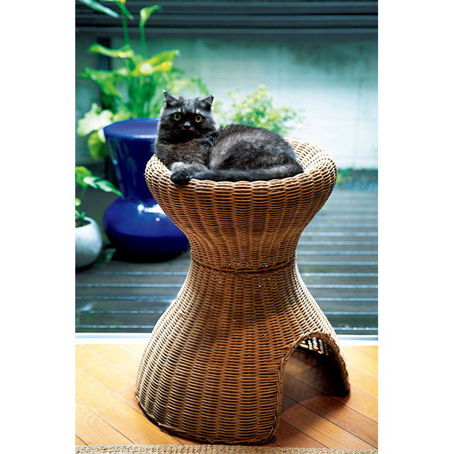 猫のセルもお気に入りの スツール