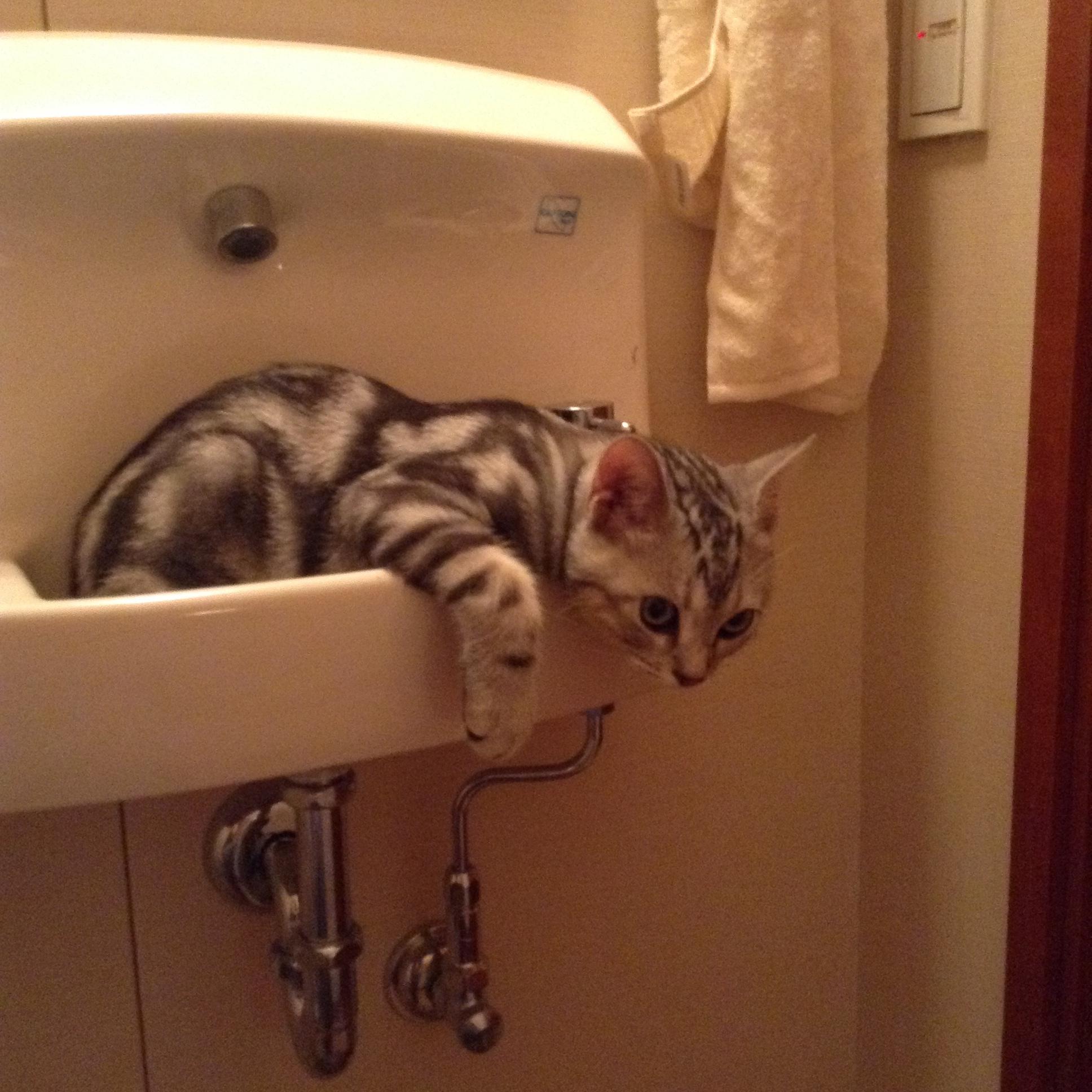 洗面台の中の子猫_1_1